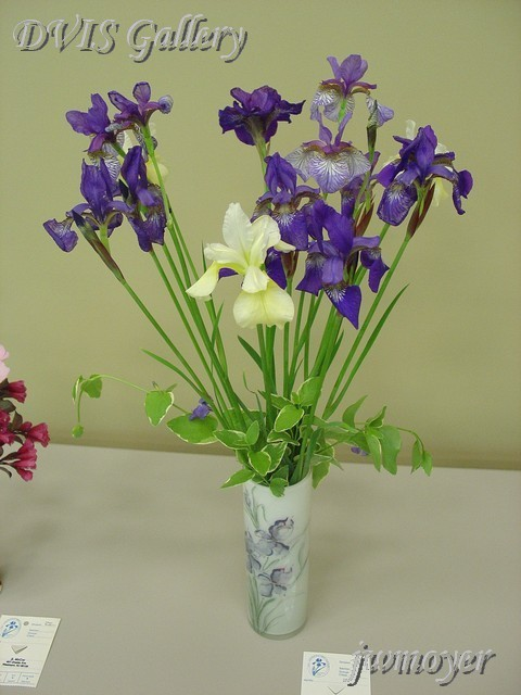 """White Iris"" ARRANGEMENT
